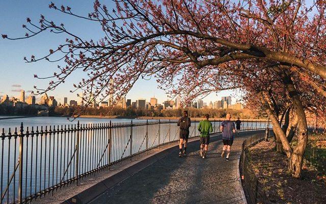 Central Park Run (Flickr-johannes_are)