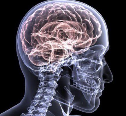 Brain (U.S. Army graphic)